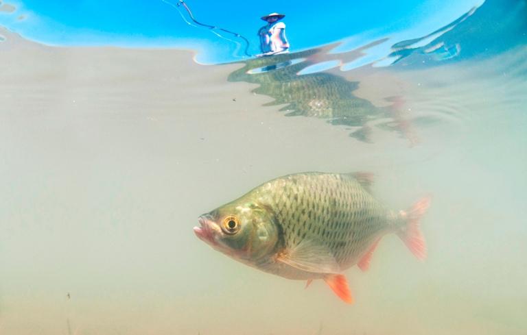 Pelitözü Göletinde Balık Avı